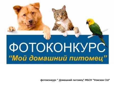 Конкурсы для животных участвовать